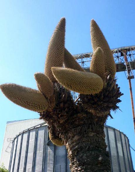 No 12 hoa, de 400 'trung vang' va nhung chuyen ky thu ve cay van tue - Anh 3