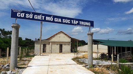Phat hien lon benh trong lo mo, dan 'to' can bo thu y lam au - Anh 3