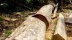 Bắt nguyên Giám đốc BQL rừng vì tham ô tài sản