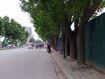 Người dân Hà Nội tiếc nuối khi 1300 cây xanh sắp bị di chuyển, chặt hạ