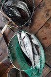 Vụ cá chết ở Lăng Cô (Thừa Thiên Huế): Thông số pH cao hơn mức bình thường