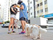 Nuôi chó ở chung cư: Cần có những quy định nghiêm ngặt
