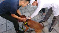 Chủ đeo nơ cho chó đi tiêm phòng ở nơi nhiều người chết vì bệnh dại
