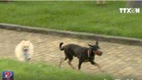 Hãi hùng chó thả rông, không rọ mõm nơi công cộng