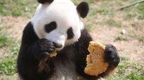 Động vật cũng được ăn bánh Trung thu