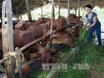 Giúp nông dân thay đổi tập quán canh tác, vươn lên làm giàu