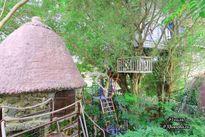Nhà cây 'độc nhất vô nhị' ở Hà Nội mà ai cũng muốn đến thăm một lần
