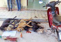 Công an Hà Nội khởi tố vụ người dân đâm chết kẻ trộm chó