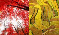 Không chỉ Nhật Bản - Hàn Quốc, Trung Quốc cũng có mùa thu đẹp nao lòng