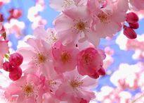 Những loài hoa đẹp nhất thế giới xem không rời mắt