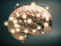 Dù chết, bộ não chúng ta vẫn còn hoạt động