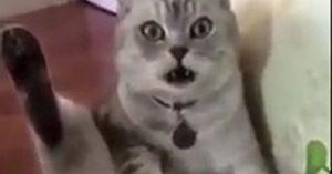 Chú mèo 'sốc nặng' khi biết mình đã thành 'thái giám'