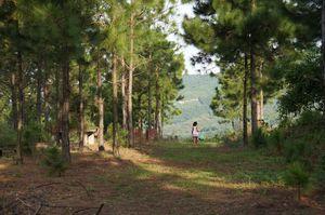 Đổi gió về Đông Triều thưởng ngoạn cảnh quê thơ mộng tại đồi Khe Chè
