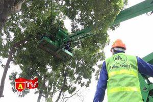 Hà Nội: Bắt đầu di chuyển gần 1.200 cây xanh trên đường Phạm Văn Đồng