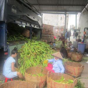 Độc đáo chợ bắp lớn nhất Sài thành