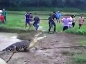 Cá sấu dài 5m lao thẳng lên bờ 'truy sát' dân làng
