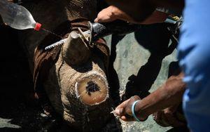 Cận cảnh quy trình cưa sừng tê giác 'hợp pháp' nhưng vẫn gây tranh cãi