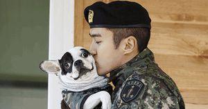 Siwon cũng từng bị chính chó cưng của mình cắn