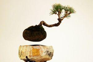 Chơi bonsai bay lơ lửng như… mây