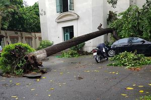 Nhiều tuyến phố ngập sâu, cây đổ sau mưa lớn ở Hà Nội