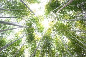Khám phá rừng trúc đẹp như trong phim tại tỉnh Cao Bằng