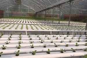 Khu sinh thái nông nghiệp công nghệ cao ở Hà Nội chính thức hoạt động