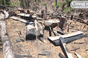 Ai đứng sau vụ phá rừng phòng hộ Tiên Lãnh? (Kỳ 1: Phá rừng để... trồng rừng!)