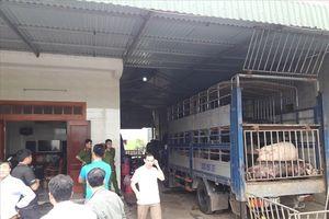 Bắt 2 xe tải đổ hàng chục con lợn chưa qua kiểm dịch
