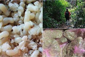 Nghe người đi rừng kể lại nguy hiểm rình rập trong những chuyến săn trứng kiến giúp thu nhập bạc triệu
