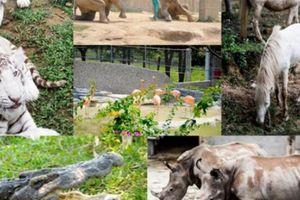 Vườn 'thú cưng' đẳng cấp trên siêu dự án của 'đại gia điếu cày' Lê Thanh Thản