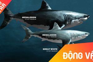 Đâu là loài cá mập khổng lồ nhất lịch sử?