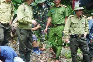 Phá rừng liên tục ở Quảng Nam: Một kiểm lâm quản lý 10.000ha sao nổi