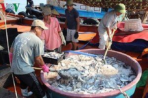 Từ sự cố môi trường biển:Không đánh đổi môi trường lấy lợi ích kinh tế
