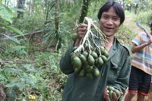 Sau 40 năm sống biệt lập, người rừng Hồ Văn Lang giờ ra sao?