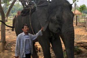 Gánh nặng vì voi ở Buôn Đôn