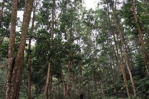 Phú Thọ quyết 'đòi' hơn 3.000 ha đất của Tổng công ty Giấy