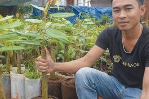 'Hot boy bánh mật' kiếm bộn tiền nhờ đưa giống sầu riêng 'vua' về quê