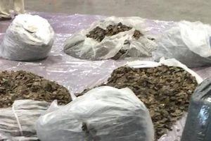 Phát hiện hơn 300 kg vảy tê tê trong lô hàng từ Nigeria về Việt Nam