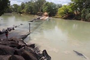 Thế giới động vật: Cá sấu ranh ma cướp chiến lợi phẩm của thợ câu cá trong chớp mắt