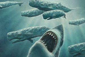 Siêu cá mập siêu bạo chúa Megalodon trong 'The Meg' có thực sự từng tồn tại?