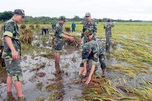Vỡ đập thủy điện ở Lào khiến lũ về sớm, dân miền Tây vừa mừng vừa lo