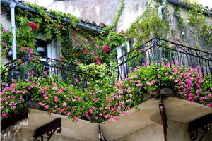 Nhà có ban công hướng Tây vẫn mát nếu trồng những loại cây ưa nắng này