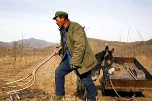 Trung Quốc thuê đất khắp thế giới đỡ đòn trừng phạt Mỹ