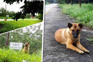 Chú chó bị bỏ rơi 1 năm ngồi bên vệ đường đợi chủ đến đón và kết cục khiến ai cũng phải rơi nước mắt