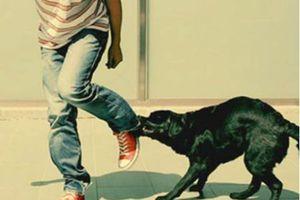 Khi vật nuôi 'phản chủ': Đã đến lúc siết quản lý thú cưng