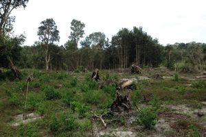 Nhức nhối Khu bảo tồn Bình Châu – Phước Bửu