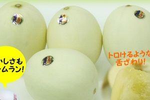 Tận mục dưa lê trắng Nhật nửa triệu đồng/kg hút khách Việt