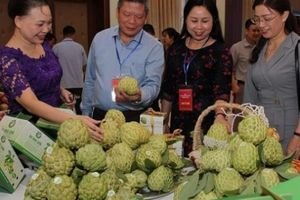 Sơn La: 7 tháng đầu năm xuất khẩu nông sản đạt 90 triệu USD