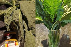 Tiếc bó rau héo quắt, bà mẹ mang về 'biến' thành rau tươi như mới chỉ với 1 cốc nước