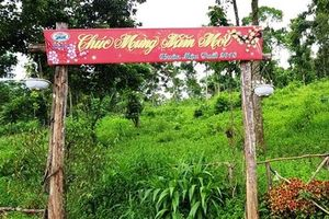 Dấu hỏi lớn về năng lực quản lý, bảo vệ rừng của tỉnh Điện Biên?